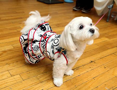 dog fashion a34 The Latest in Dog Fashion