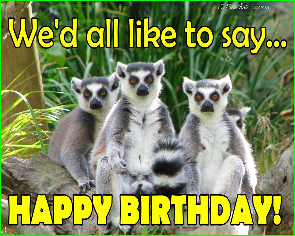 happy birthday meme pics 8 60 HAPPY BIRTHDAY MEME BEST EVER