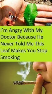 I'M ANGRY WITH MY DOCTOR BECAUSE HE NEVER TOLD ME THIS LEAF MAKES YOU STOP SMOKING 167x300 I'M ANGRY WITH MY DOCTOR BECAUSE HE NEVER TOLD ME THIS LEAF MAKES YOU STOP SMOKING